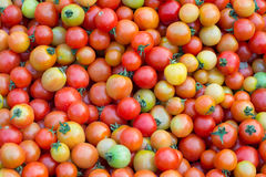 Group of fresh tomatoes Stock Photography