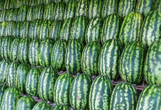 Group of fresh watermelons. Stock Image
