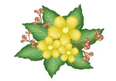 A Group of Fresh Yellow Simpor Flowers Royalty Free Stock Image