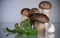 Group of freshly harvested cep porcini boletus with oregano copy space on grey background Stock Photos