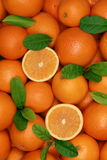 Group of freshly picked oranges with leaves Stock Image