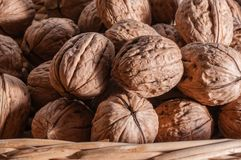 Organic walnuts. A Group of freshly picked walnuts in a basket Royalty Free Stock Photo