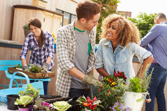 Group Of Friends Planting Rooftop Garden Together Royalty Free Stock Photo