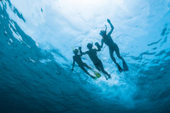 Group of friends swims a sea Stock Photography