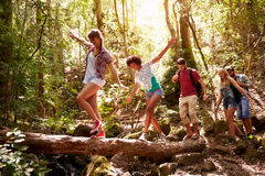 Group Of Friends On Walk Balancing On Tree Trunk In Forest Stock Image