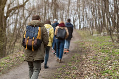 Group of friends walking with backpacks in spring forest from back. Backpackers hiking in the woods. Adventure, travel Stock Image