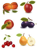 A group of fruit. royalty free illustration