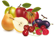 Group of fruit. Stock Images
