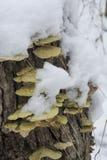 Fungus in the snow stock photos