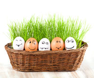 Group of Funny crazy smiling eggs in basket with grass. sun bath. royalty free stock photo