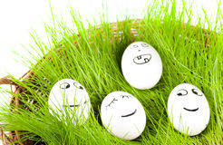 Group of  Funny crazy  smiling  eggs in  basket with grass. sun bath. Royalty Free Stock Image