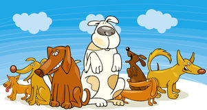Group of funny dogs Stock Image