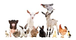 Group of funny farm animals. Isolated on white background royalty free stock image