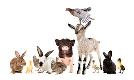 Group of funny farm animals together