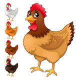Group of funny hens in different colors Royalty Free Stock Photography