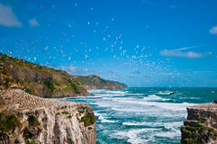 Group of gannets high up in the sky Royalty Free Stock Photo