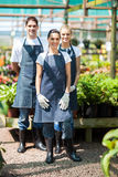 Group gardeners. Portrait in greenhouse royalty free stock image
