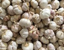 Group of garlics Royalty Free Stock Photos