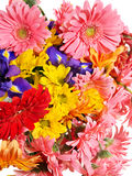 Group of gerbera flower head Royalty Free Stock Photos