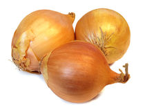 Group of golden onions Stock Image