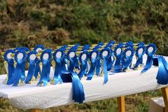 Golden colored trophies waiting for winners at an equestrian event summertime. Group of golden trophies championship awards in row outdoors stock images