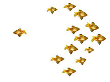 Group of goldfishes Royalty Free Stock Image