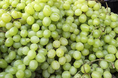 Group of grapes Royalty Free Stock Images