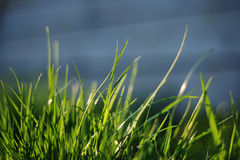 A group of grass Royalty Free Stock Photos