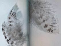 Group of gray spotted owl feathers Stock Photo