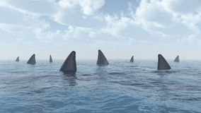 Group of great white sharks. Computer generated 3D illustration with a group of great white sharks Stock Image