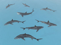 Group of great white sharks. Computer generated 3D illustration with a group of great white sharks Royalty Free Stock Photography
