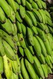 Group of green bananas maturing Royalty Free Stock Photo