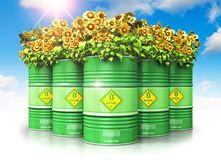 Group of green biofuel drums with sunflowers against blue sky wi. Creative abstract ecology, alternative sustainable energy and environment protection saving Stock Photos