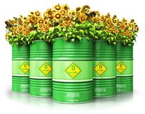 Group of green biofuel drums with sunflowers isolated on white b. Creative abstract ecology, alternative sustainable energy and environment protection saving Stock Photos