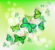 A group of green butterflies Stock Photo