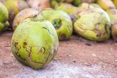 Group of green coconuts Royalty Free Stock Photos