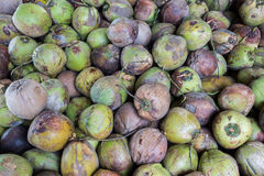 Group of green coconuts. Stock Images