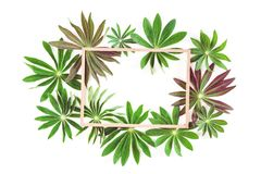 Group of green exotic leaves frame isolated royalty free illustration