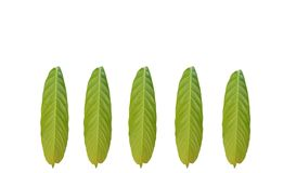 Group of green foliage tropical leaf isolated on white backgrounds stock illustration