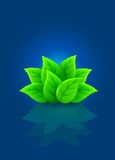 Group of green leaf on blue background Stock Images