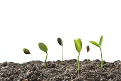 Group of green sprouts growing out from soil Royalty Free Stock Photography