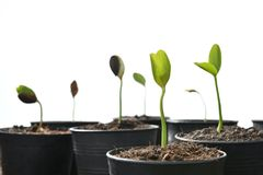 Group of green sprouts growing out from soil Stock Photo
