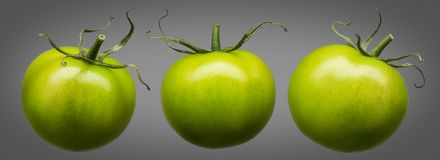 Group of green tomatoes isolated on grey Royalty Free Stock Photography
