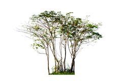 Group of green trees on white background Stock Photos
