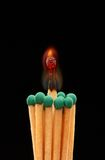 Group of green wooden matches with burning match in the centre. Isolated on black background Stock Images