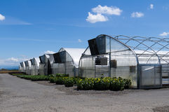 Group of greenhouses with plants Royalty Free Stock Photos