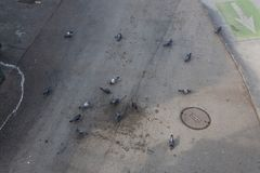 Group of grey pigeons on a stained roadway by a bike path, overhead view. Horizontal aspect Stock Photo