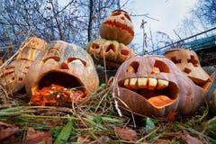 Group of Halloween pumpkin Royalty Free Stock Photos