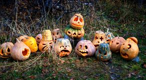 Group of Halloween pumpkin Royalty Free Stock Photos