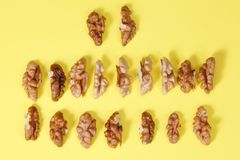 Group of halves of walnut. Group of halves of walnut stock images